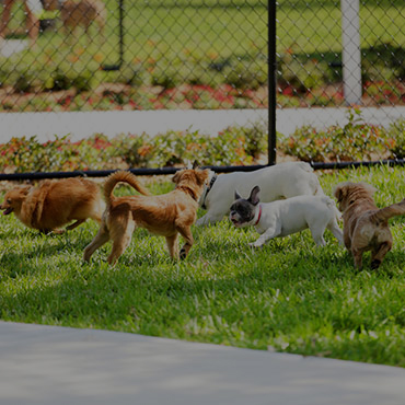 Large Dog Park at Willow Cove Apartments